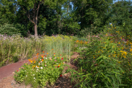 Caldwell Pollinator Garden Landscape
