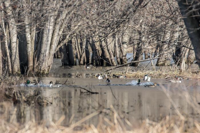 Hatfield Swamp